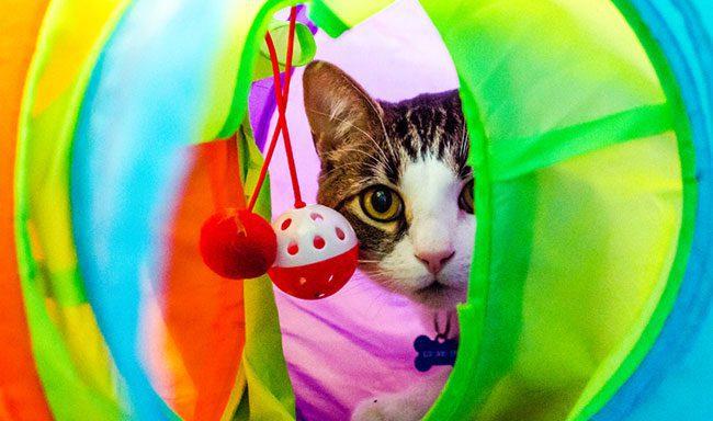 ساختن اسباب بازی گربه